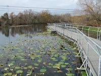 Aquarena Wetlands Walkway