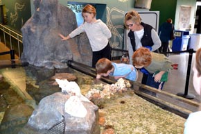 Coastal Touch Tank at Childrens Aquarium