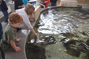 Stingray Bay at  Children's Aquarium at Fair Park Dallas