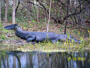 Brazos Bend State Park Review And Rating