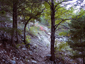 2015-10-11_guadalupepeaktrail_maple