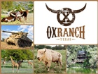 Ox Ranch