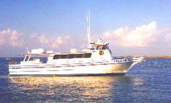 Texas gulf coast charters and fishing guides use these - Private deep sea fishing port aransas ...