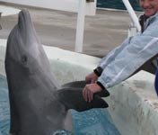 Petting the dolphins at Gulf World