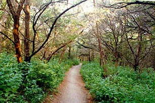 The Long and Winding Trail (which leads to MOPAC)