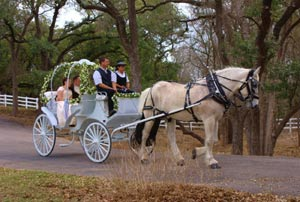 Rent a horse drawn carraige for your wedding