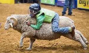 Mutton Riding