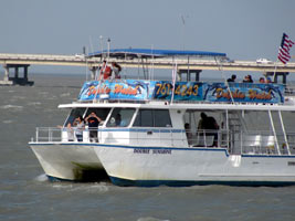 Dolphin Watch And Eco Tour