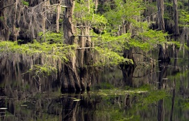 Texas State Parks to Paddle with Canoes and Kayaks