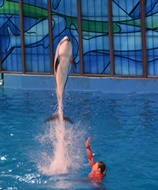 Dolphins put on a high diving show