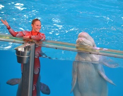 Talented Whate at SeaWorld San Antonio
