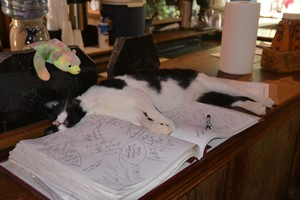 Cat asleep on the guest book