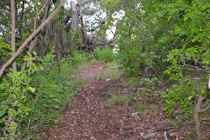 Trail at Rainbow Hearth