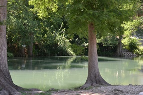Guadalupe River  at River Ranch RV Resort