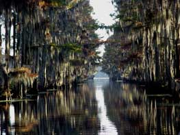 A small cut leading into Caddo Lake
