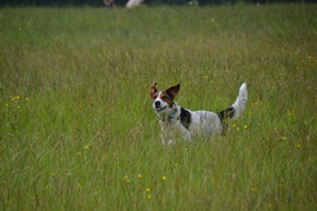 A rescued dog running through the tall grass and flowers