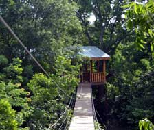 Bridge from the platform to the Tree House