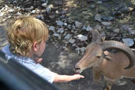 Feeding the animals at Natural Bridges Wildlife Ranch